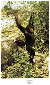 Na šimpanzích stezkách - bazar