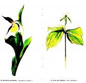 Květy Moravského krasu - bazar