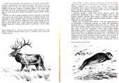 Zvířata tunder a stepí - bazar