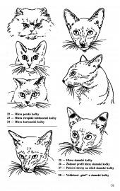 Atlas plemen koček - bazar