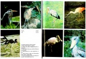 Ptáci a voda - bazar