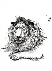 Lvi hladovějí v Neapoli - bazar
