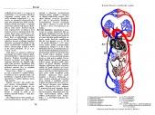 Příruční slovník lékařsko-lékárnických názvů - bazar