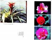 Pokojové květiny ozdobné květem - bazar