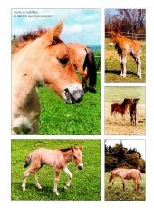 Koně nelžou - bazar