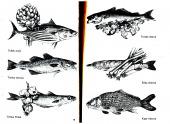 Ryby v kuchyni - bazar