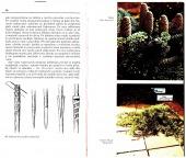 Jehličnany v zahradě a alpínu - bazar