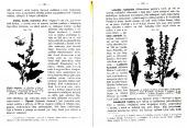 Malý Brehm - Rostlinopis - bazar