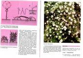 Okrasná zahrada a její rostliny - bazar