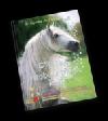 Příběhy neobyčejných koní
