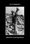 Adenium a Pachypodium