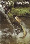 Ryby zblízka