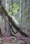 Les v hodině dvanácté