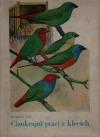 Cizokrajní ptáci v klecích - pěnkavy snovačovité - nádherné