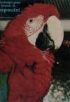 Cizokrajní ptáci v klecích II. Papoušci