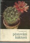 Pěstování kaktusů