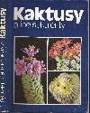 Kaktusy a iné sukulenty
