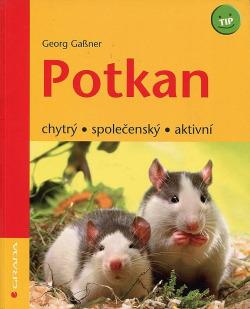 Potkan - chytrý, společenský, aktivní