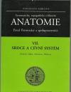 Anatomie VII. - Srdce a cévní systém