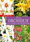 Orchideje  Vše, co potřebujete vědět o pěstování orchidejí
