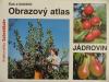 Obrazový atlas jádrovin