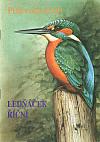 Ledňáček říční - Pták roku 2000