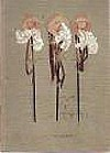 Tři mušketýři - 2. díl