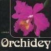 Orchidey