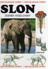 Slon obálka knihy